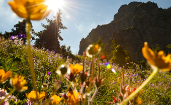 A guide to Europe's mountain flowers