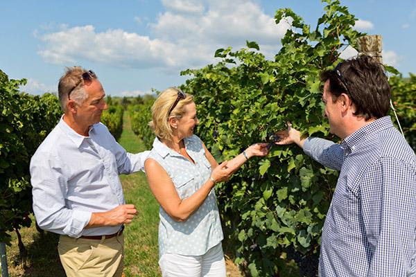 Wine tour of a vineyard