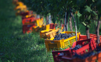 Wine festivals on Lake Garda